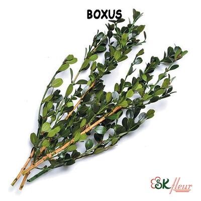 Boxus / Green
