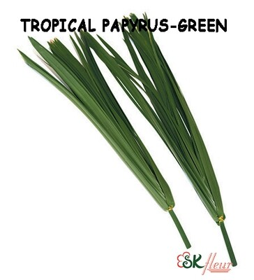 Tropical Papyrus / Green