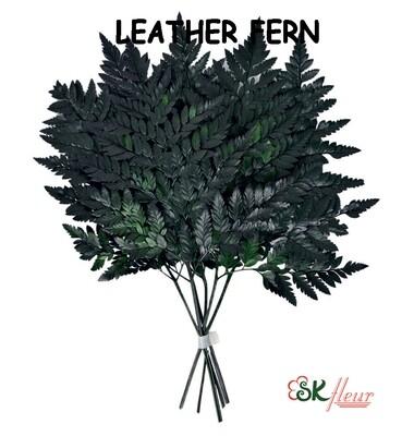 Leather Fern / Green