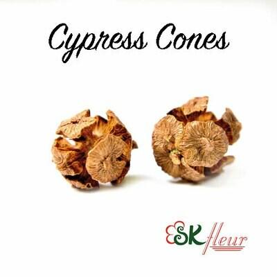 Cypress Cones