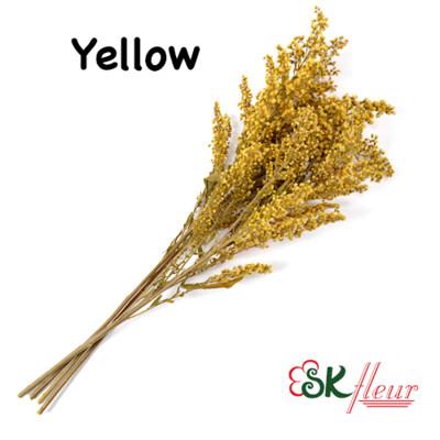 Solidago Brooms/ Yellow