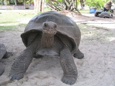 PRASLIN: Curieuse (Schildkröten-Insel, mit BBQ) & St. Pierre 7 Std., Bella Vita Charter - Sony Lesperance, PREIS: 85€, Anzahlung: