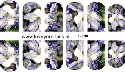 Lilly 1-288
