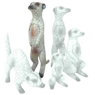 Meerkat Male