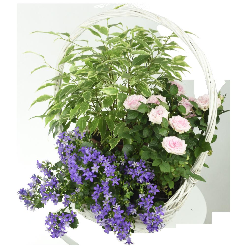 Romanticky záhradný mix