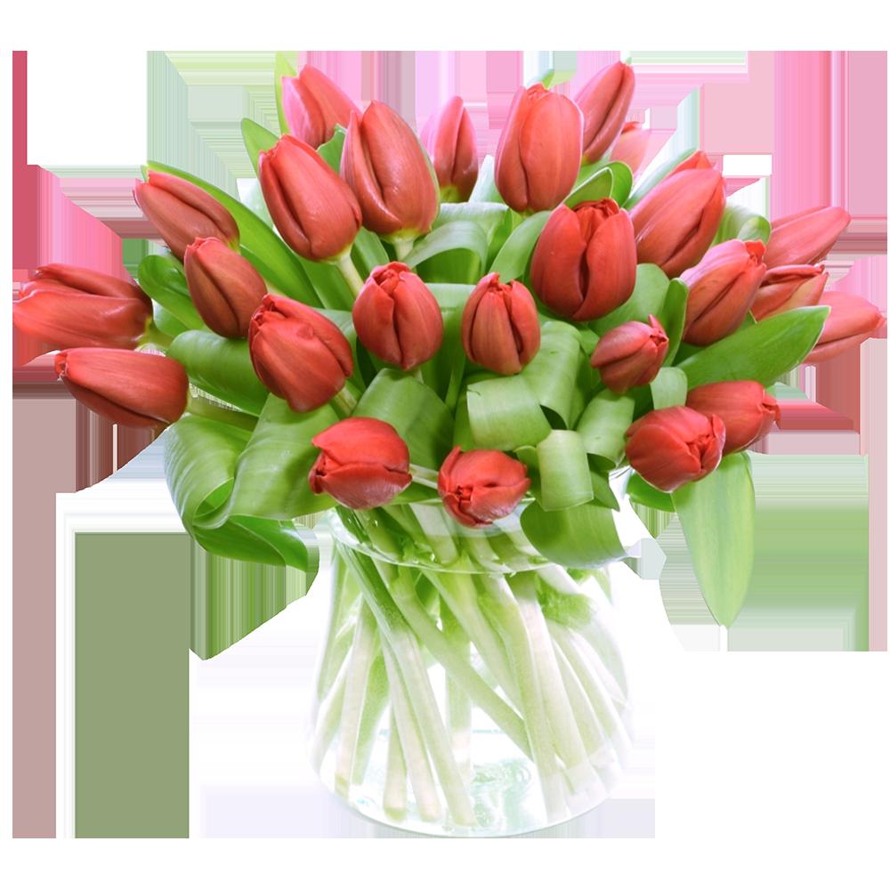 Červený tulipán