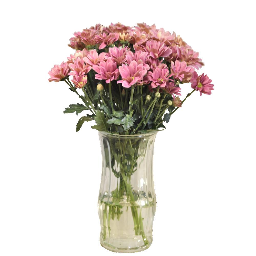 Lososovoružové chryzantémy