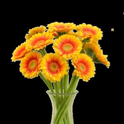 Oranžovo-žlté gerbery