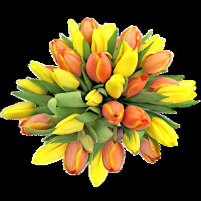 Oranžové a žlté tulipány