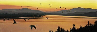 Sounds of Sunset - Canada Geese