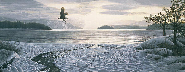 North Country Shores - Bald Eagle