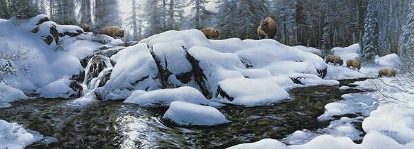 High Creek Crossing - Bison