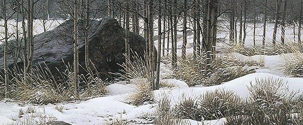 Winter Shadows - Black Wolf