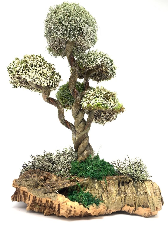 Дерево из Цетрарии - вьющаяся лиана