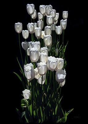 The elegance of white