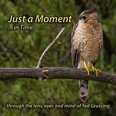 Just a Moment ... in time