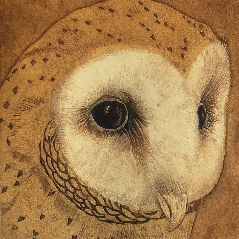 Barn Owl  -  Gallery Artists Card