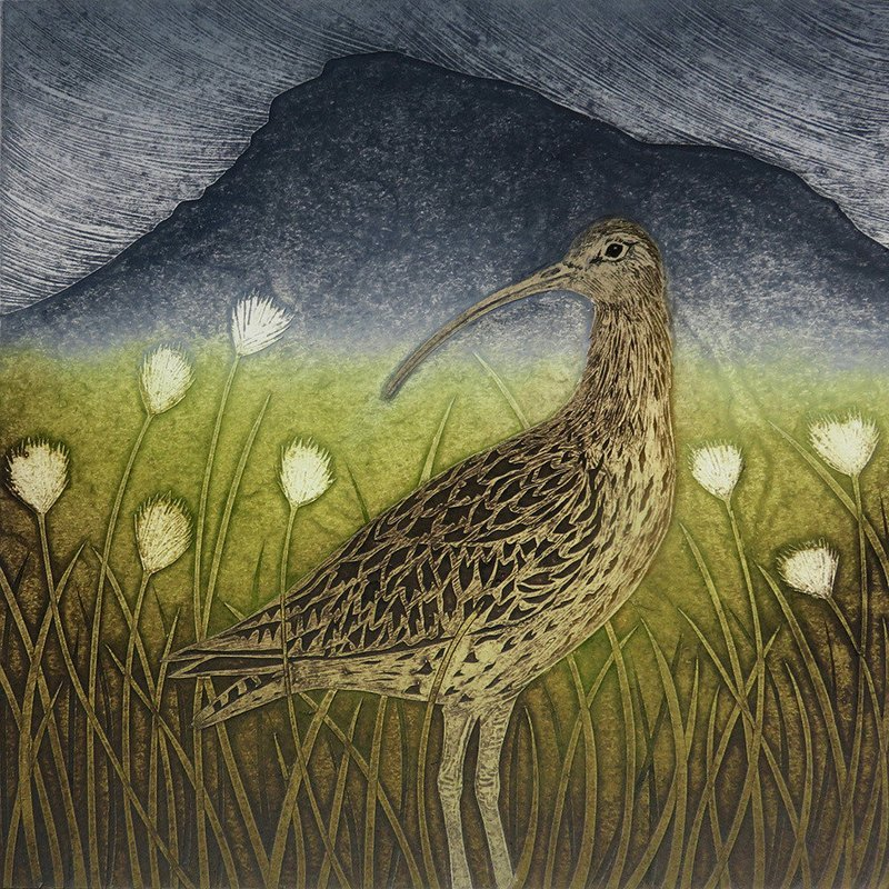 Curlew & Cotton grass -Gallery Artists Card