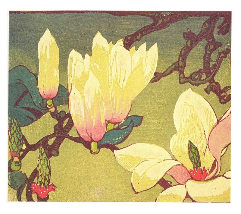 Magnolia- Printmakers Card