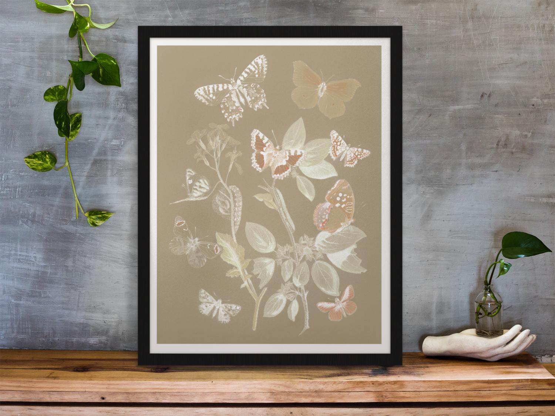 Vintage Butterflies & Moths (Brown Edition)