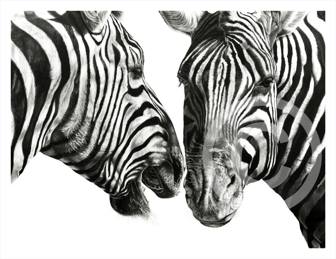 """Zebra Gossip"" A2 print on paper"