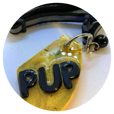 Dog Tag and Collar - Style #01
