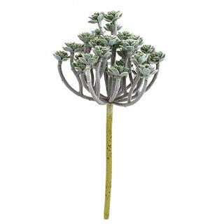 Sedum Succulent Stem 24cm
