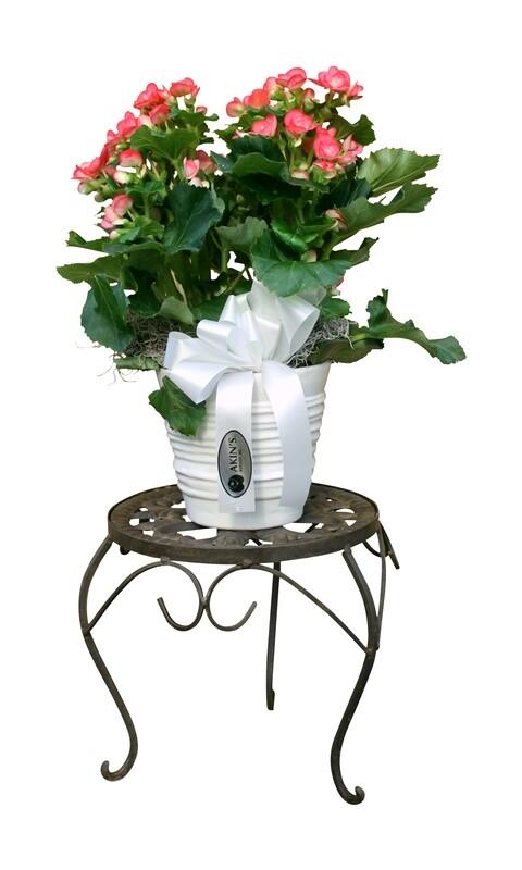 Small Deluxe Foliage in Decorative Basket