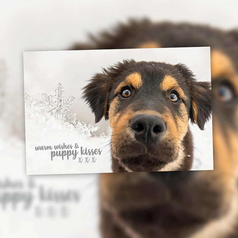 10 Pack - Holiday Cards - Blank