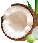 Fractionated Coconut Oil 8 fl oz (240 ml) MCT