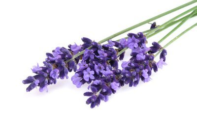 Lavender, French (Lavandula angustifolia) Pure Essential Oil Analysis Report