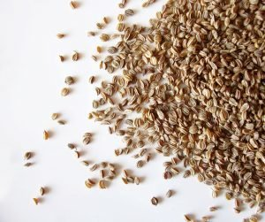 Celery Seed Pure Essential Oil Analysis Report