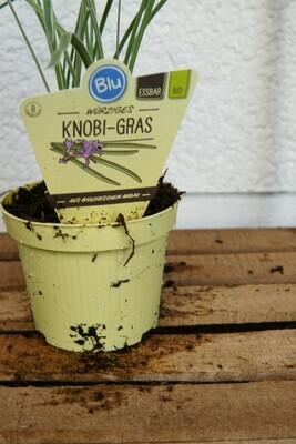 Knobi-Gras | BIO