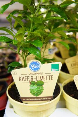 Kaffir-Limette | BIO