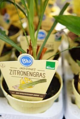 Zitronengras | BIO