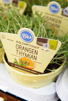Orangen-Thymian | BIO