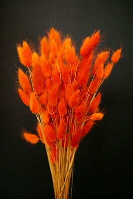 Trockenblumen | Lagurus | Bright Orange