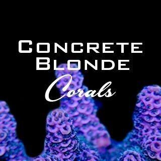 Concrete Blonde Corals