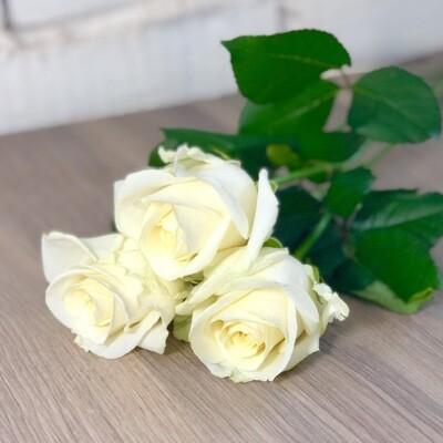 Роза белая по-штучно