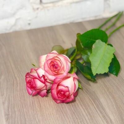 Роза Джумилия розовая по-штучно