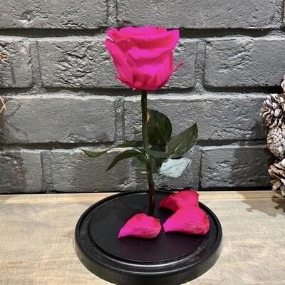 Роза в колбе Премиум малиновая