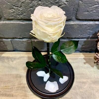 Роза в колбе Премиум белая