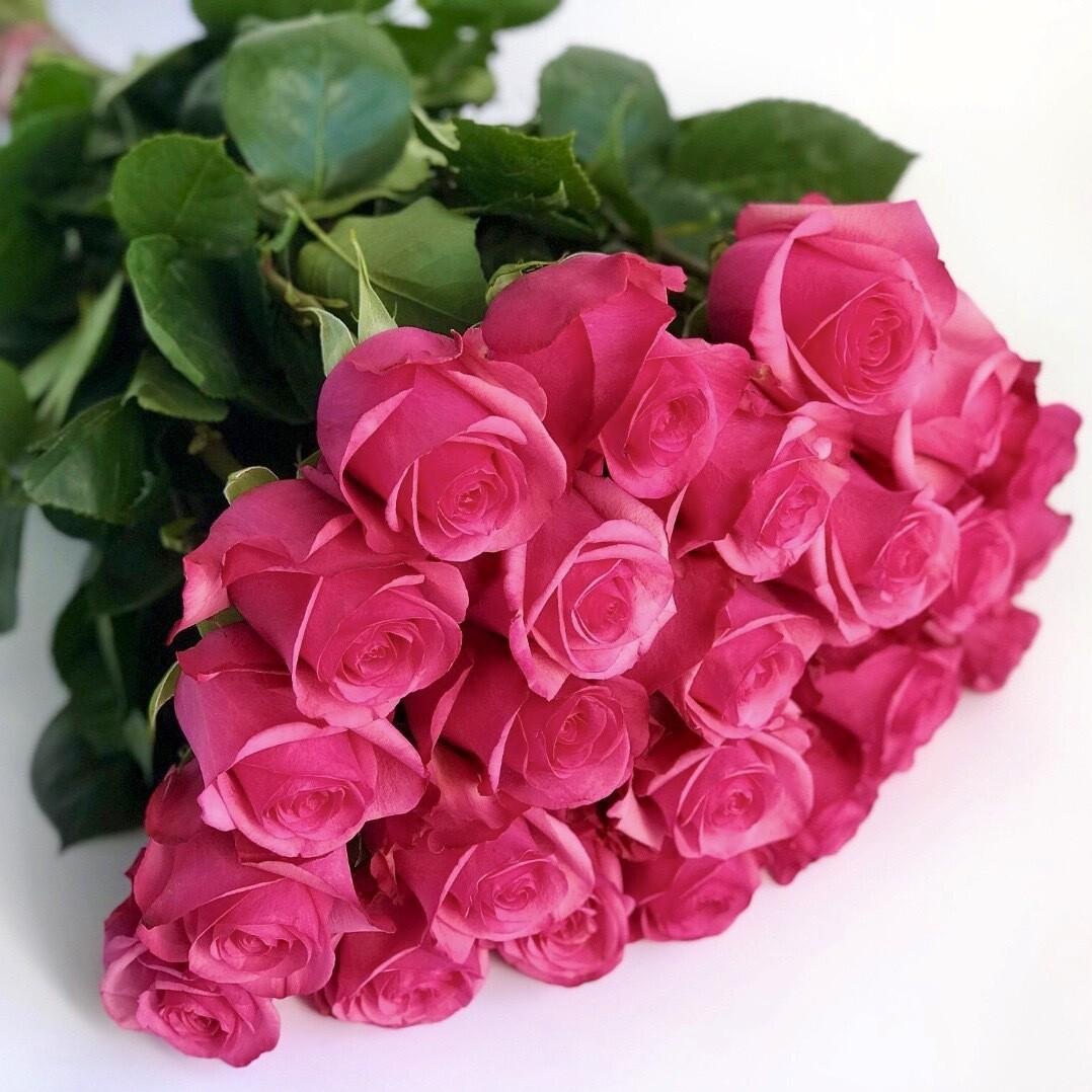 Букет из 25 роз Эквадор Пинк Флойд 60 см.