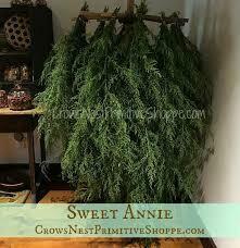 "Sweet Annie (3"" herb pot)"