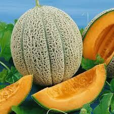 "Cantaloupe Hale's Best Jumbo (4"" vegetable pot)"