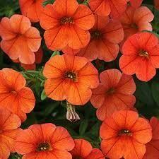 PW Million Bells Double Orange (quart pot)