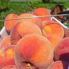 Peach Peck Box $25 (produce)