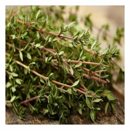 Thyme, Red, Essential Oil 1/2 oz.