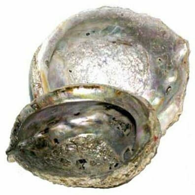 Abalone Shell For Incense., 3x4 Medium
