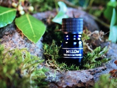 Willow Tree Perfume